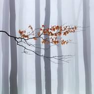 Čestné uznání v kategorii Krásy přírody: Martin Rak - Čekání na zimu.