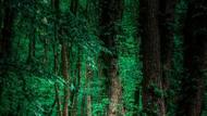 """Česká bikerka Karla Štěpánová představuje v době koronavirové pandemie svůj nový """"lesní"""" dres týmu Maloja PushBikers. (Canon EOS 1DX, EF 24-70 2,8 USM L II1/250 s, f/3,5, ISO 250)"""