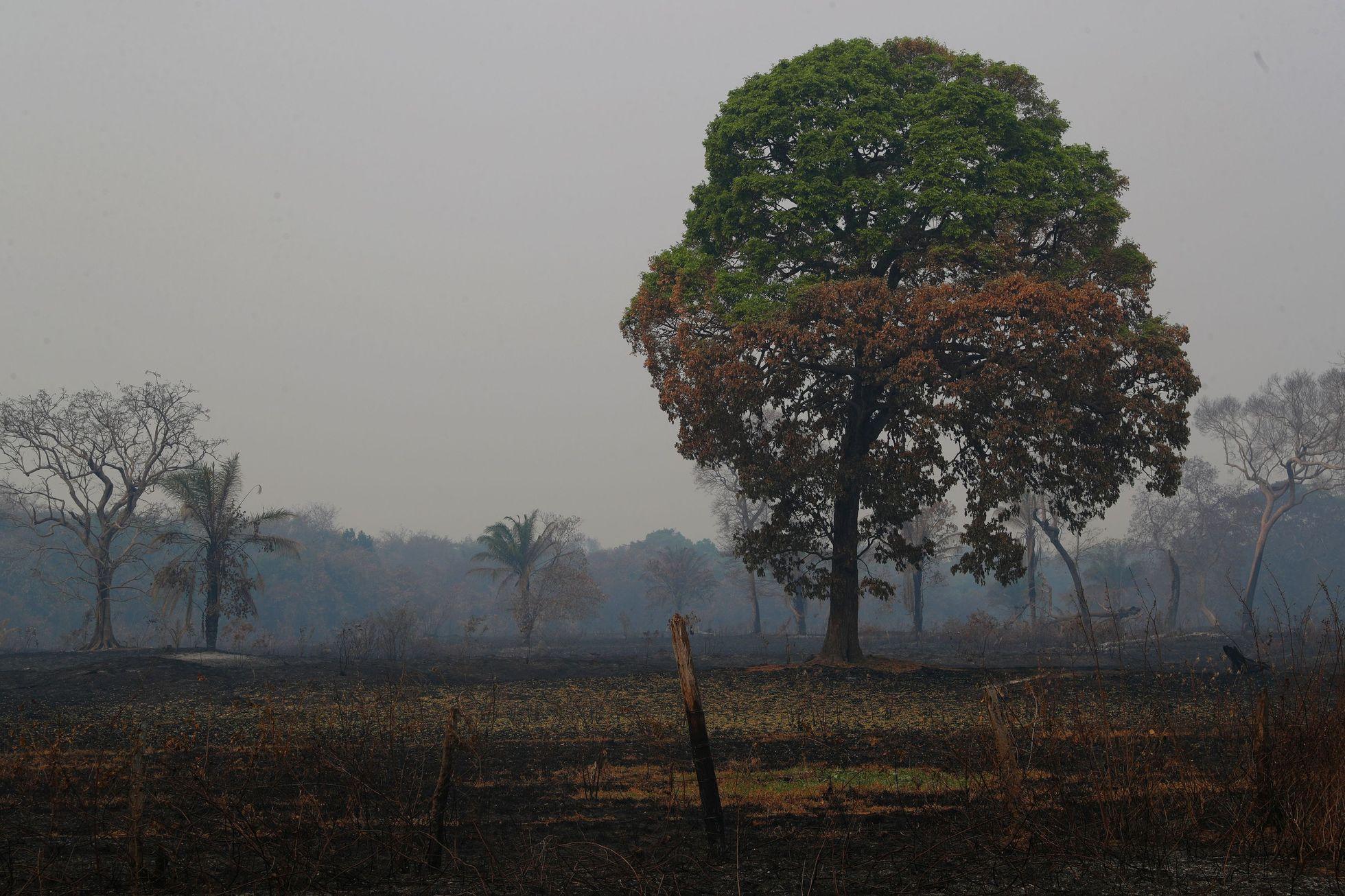 Kácení a pálení amazonského pralesa, který na severu sousedí s Pantanalem, podle odborníků dlouhodobě zhoršuje sucho v mokřadech. Chybí vlhkost a vodní pára, kterou prales vytváří.