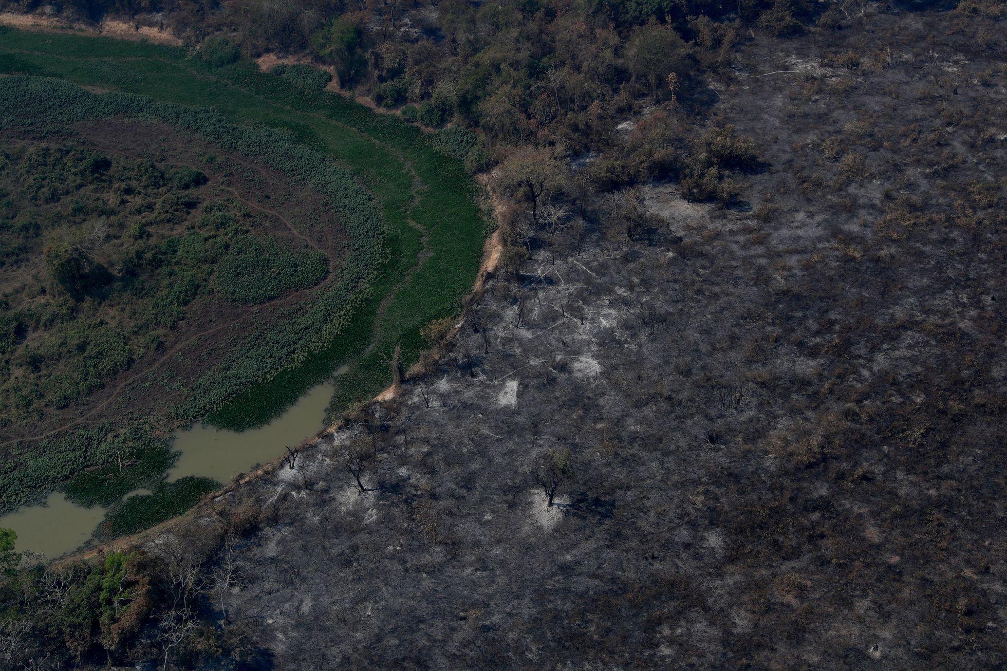 Letos už v Pantanalu shořelo přes 23 tisíc kilometrů čtverečních, tedy 16 procent celého mokřadu. Pro srovnání je to o asi tisíc kilometrů čtverečních větší plocha, než na jaké se rozprostírá Morava.