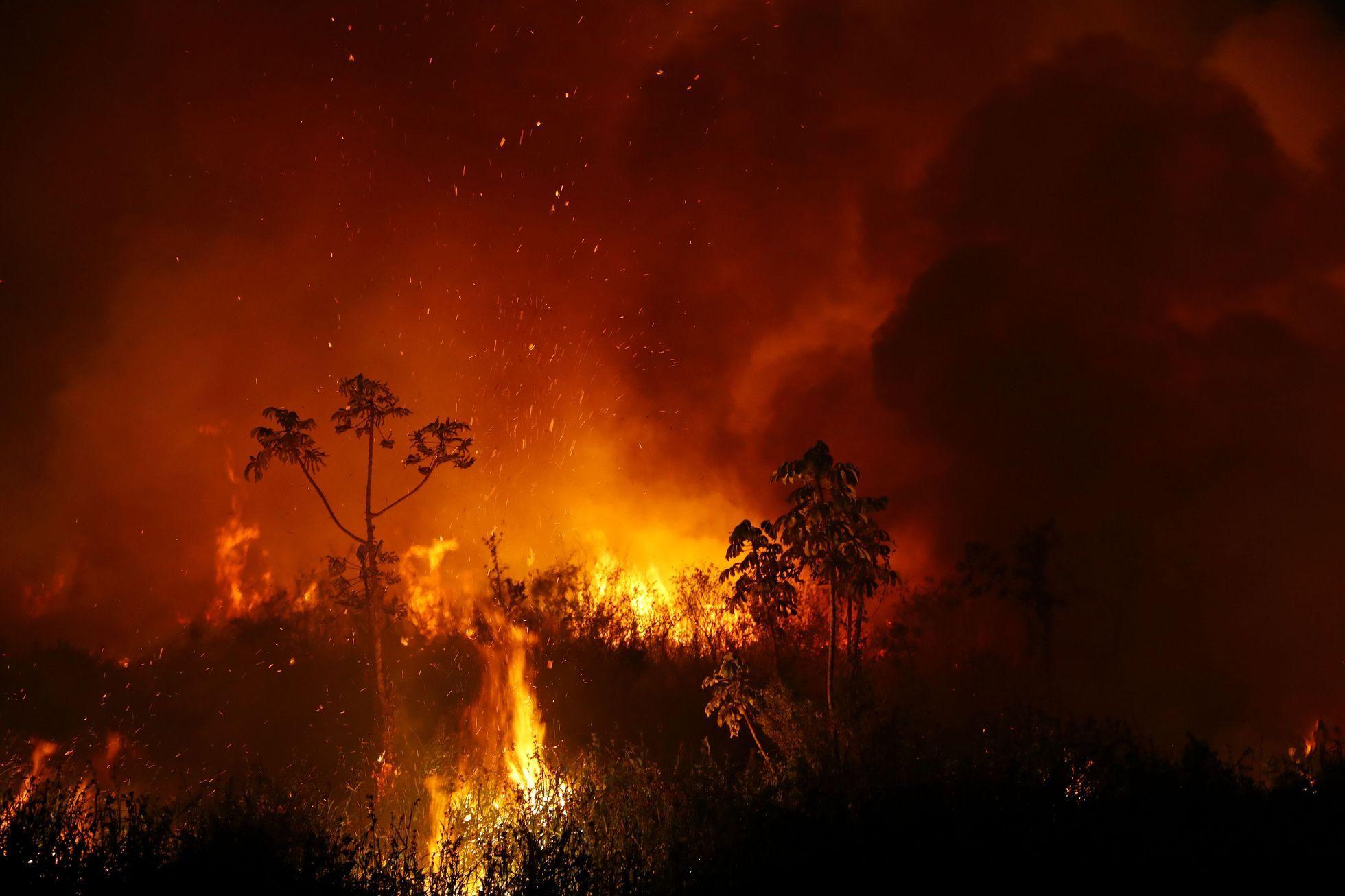 Podle místních odborníků v ohni uhynulo minimálně tisíc zvířat.